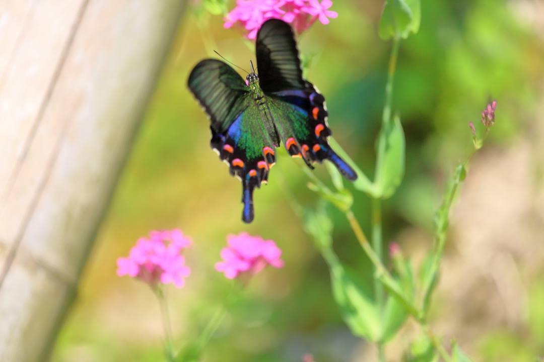 花と蝶_e0403850_20473290.jpg