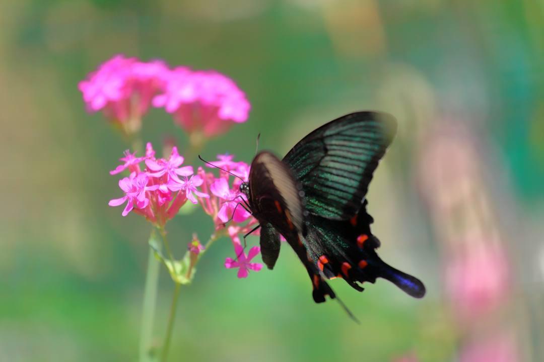 花と蝶_e0403850_20473770.jpg