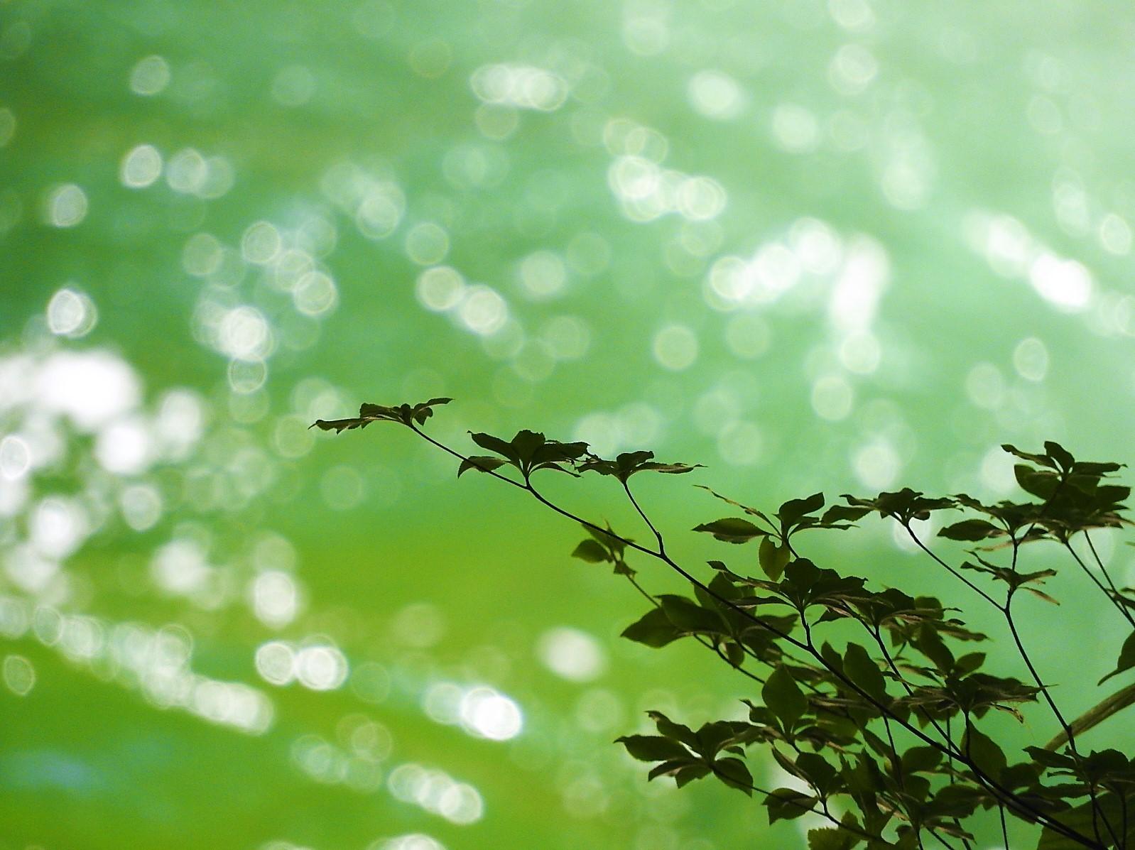 緑のしぶき_e0406450_19011963.jpg