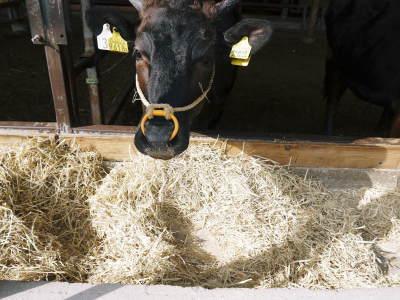熊本県産黒毛和牛100%のハンバーグステーキをまもなく販売スタート!牧草も自ら育てるこだわり!_a0254656_19240319.jpg