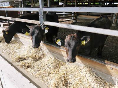 熊本県産黒毛和牛100%のハンバーグステーキをまもなく販売スタート!牧草も自ら育てるこだわり!_a0254656_19381929.jpg