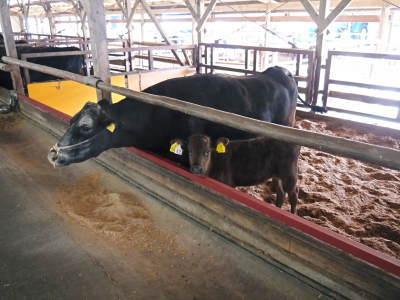 熊本県産黒毛和牛100%のハンバーグステーキをまもなく販売スタート!牧草も自ら育てるこだわり!_a0254656_19534351.jpg
