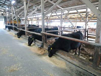 熊本県産黒毛和牛100%のハンバーグステーキをまもなく販売スタート!牧草も自ら育てるこだわり!_a0254656_20001189.jpg