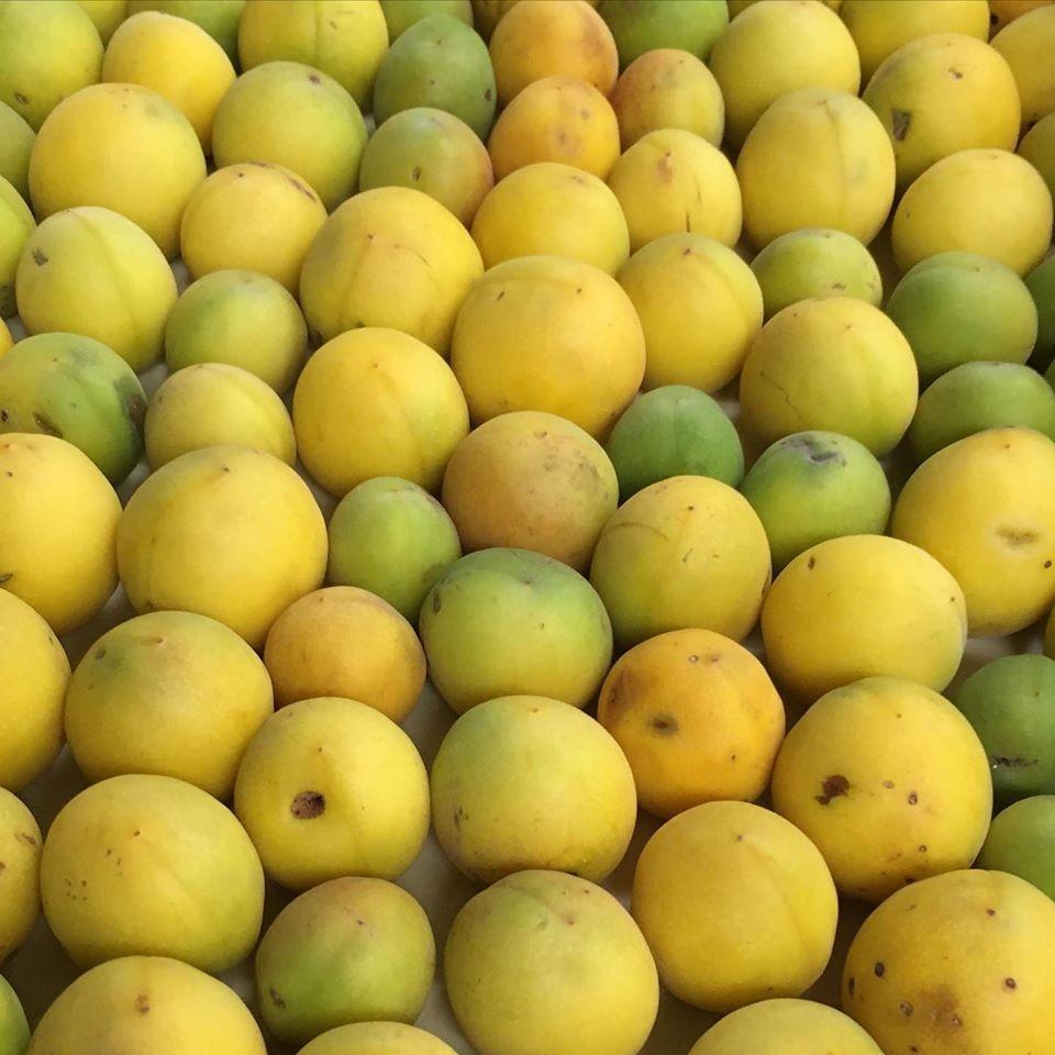 野瀬自然農園から無農薬、今年も完熟の梅が届きました_c0172969_11580673.jpg
