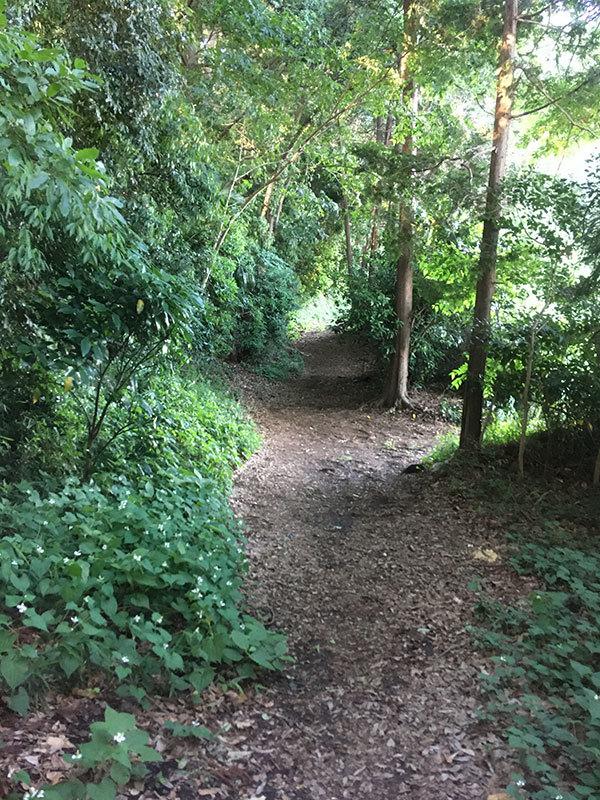 緑の散歩道と材木屋さんに行った話_d0021969_10183900.jpg