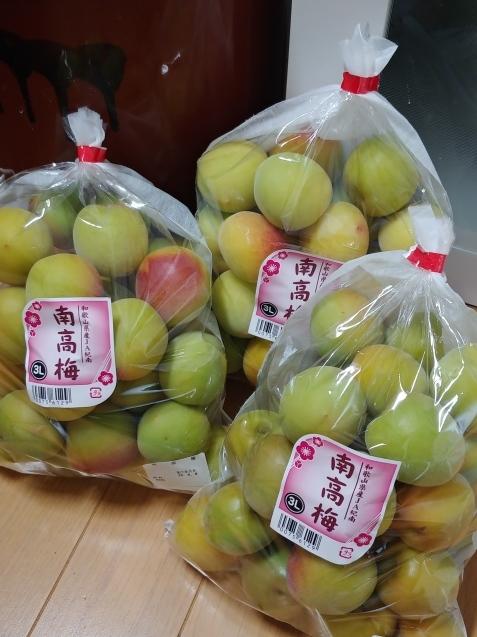 梅と新生姜_c0162773_23424652.jpg