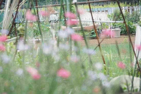 家庭菜園_f0188274_11360867.jpg