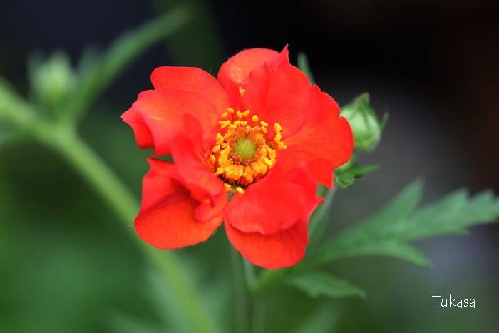 ベランダの花達_e0040092_17432261.jpg