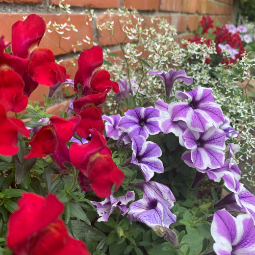 先日植えた夏仕様のお花たちが_b0105897_02061011.jpg