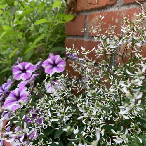 先日植えた夏仕様のお花たちが_b0105897_02093572.jpg