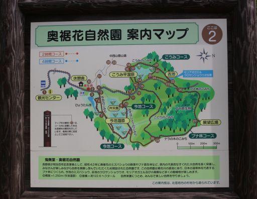 20200606 【ハイキング】奥裾花自然園-2_b0013099_07450940.jpg
