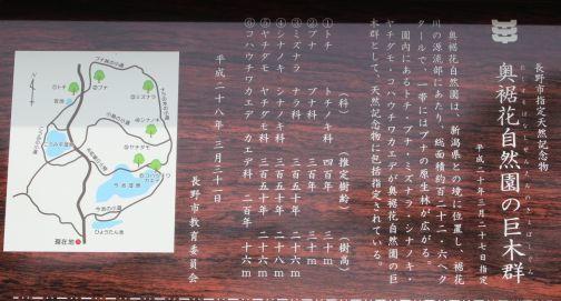 20200606 【ハイキング】奥裾花自然園-2_b0013099_07452795.jpg