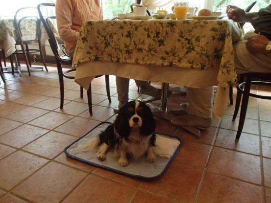 3代目のキャバリアは元保護犬。_f0064906_15562519.jpg
