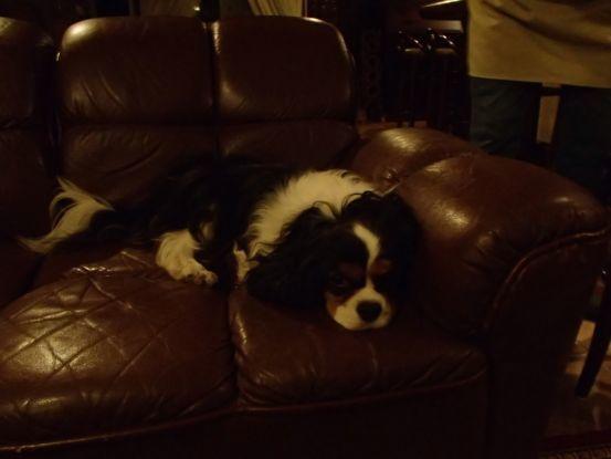 3代目のキャバリアは元保護犬。_f0064906_15563068.jpg