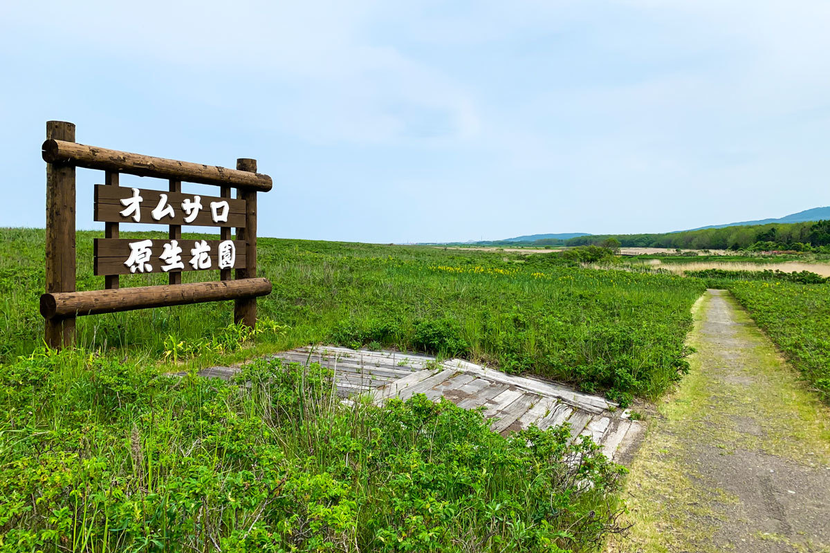 オムサロ原生花園_c0033513_20561370.jpg