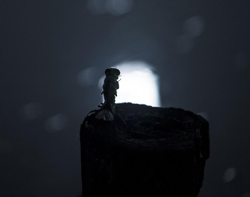 ウチワヤンマ 羽化-3 満月の翌日_f0324026_00365604.jpg