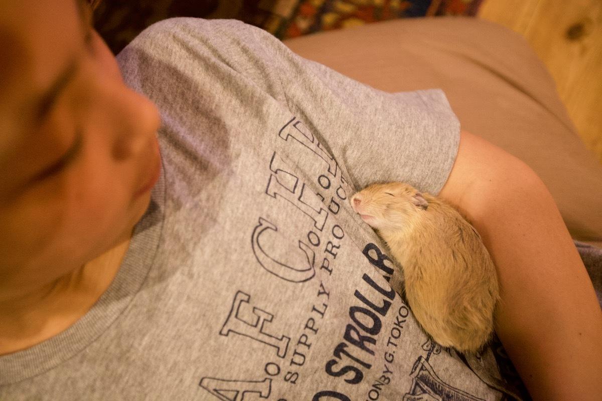デグー、寝てる時は天使_c0163369_16280157.jpeg
