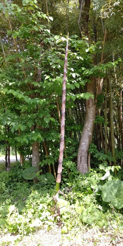 竹ってすごい_c0126281_13202781.jpg
