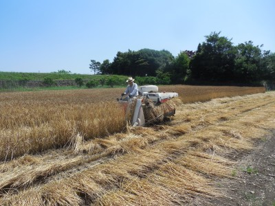小麦収穫_c0332682_21431770.jpg