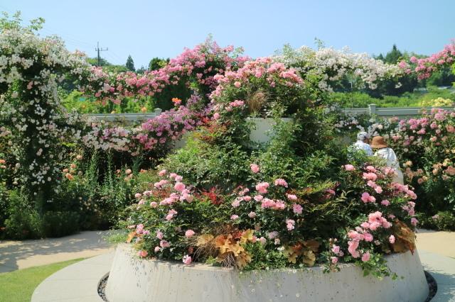 満開の中之条ガーデンズへ~♪_e0397815_16494352.jpg