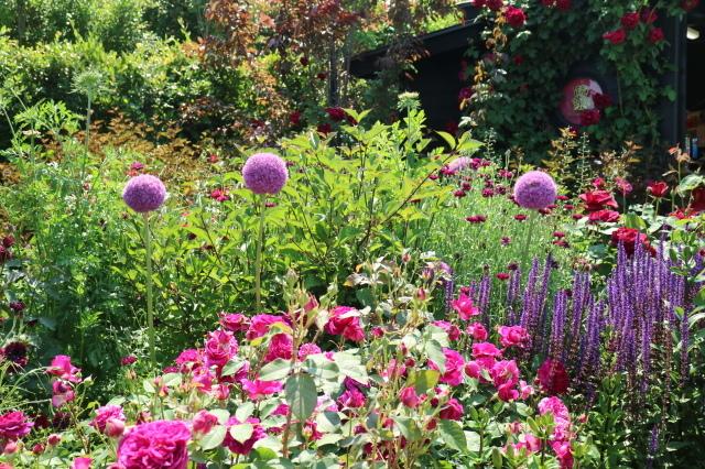 満開の中之条ガーデンズへ~♪_e0397815_17071416.jpg
