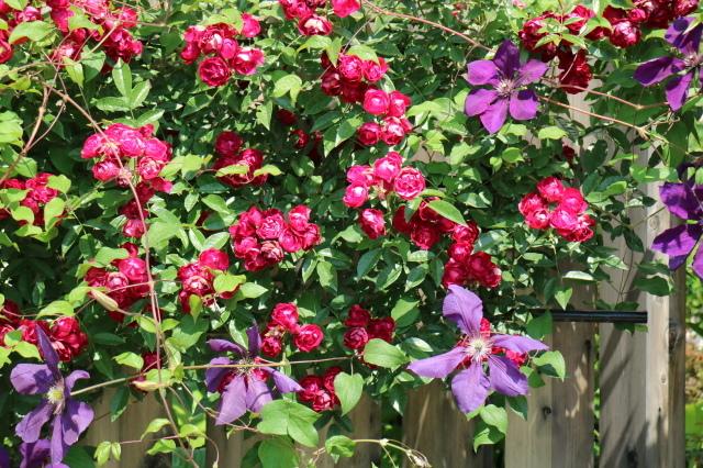 満開の中之条ガーデンズへ~♪_e0397815_17082964.jpg