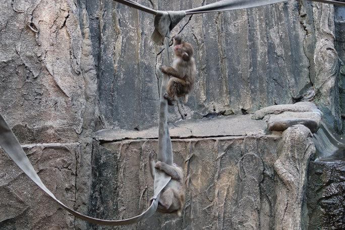 多摩動物公園サマーナイト2019①~ニンジン大好き!ツキノワグマ「ソウ」、ニホンザルの子供たち_b0355317_21313333.jpg