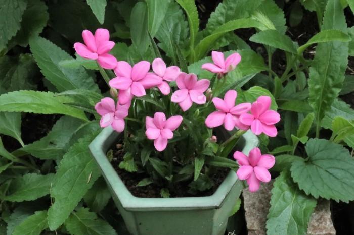 6月の庭花 _d0150720_11214820.jpg