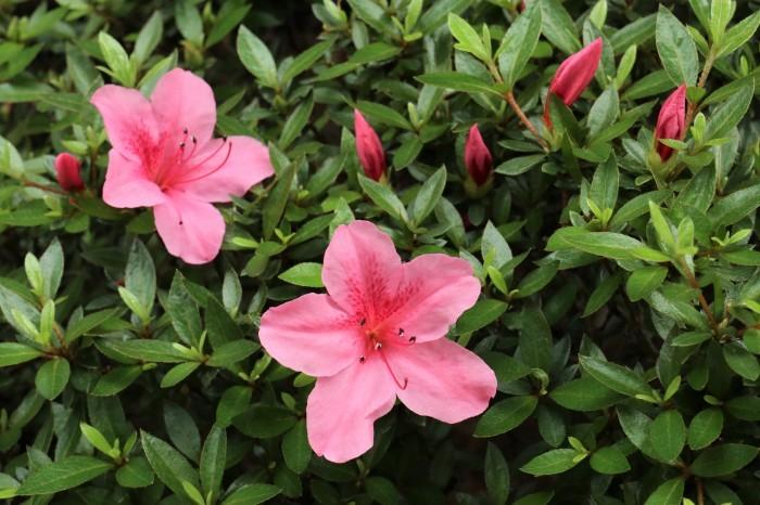 6月の庭花 _d0150720_11261040.jpg