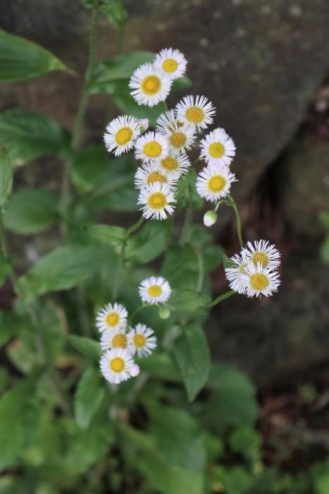 早朝散歩の花々_d0150720_14425952.jpg
