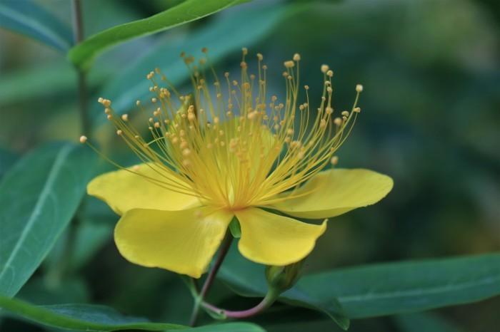 早朝散歩の花々_d0150720_14443912.jpg