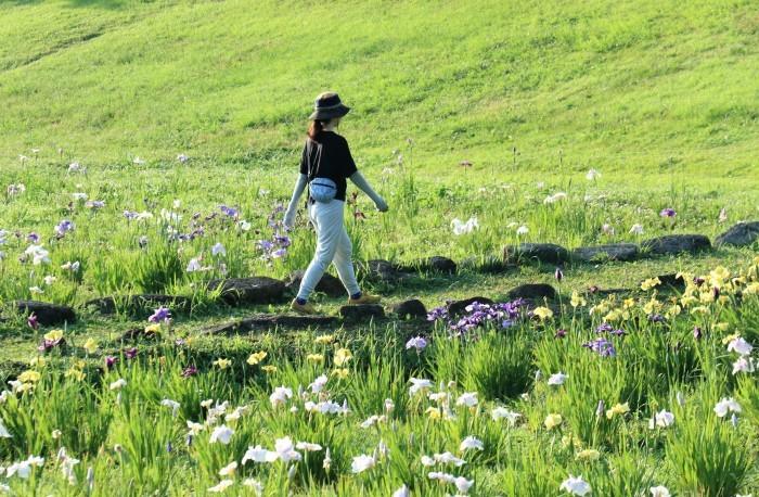 大宮第二公園 花菖蒲園_d0150720_15321997.jpg