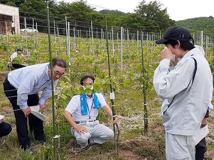 相双農林事務所大波所長が高田島ヴィンヤード視察_d0003224_10374899.jpg
