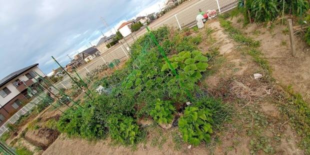 2020年6月 家庭菜園_b0211330_23561753.jpg