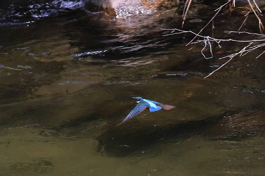 渓流の鳥_e0077041_20504561.jpg