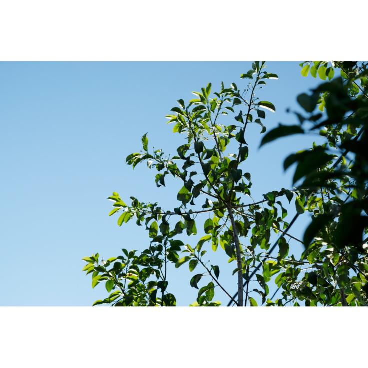 隣家アトリエの庭づくり、はじめました。_d0227246_14364528.jpg