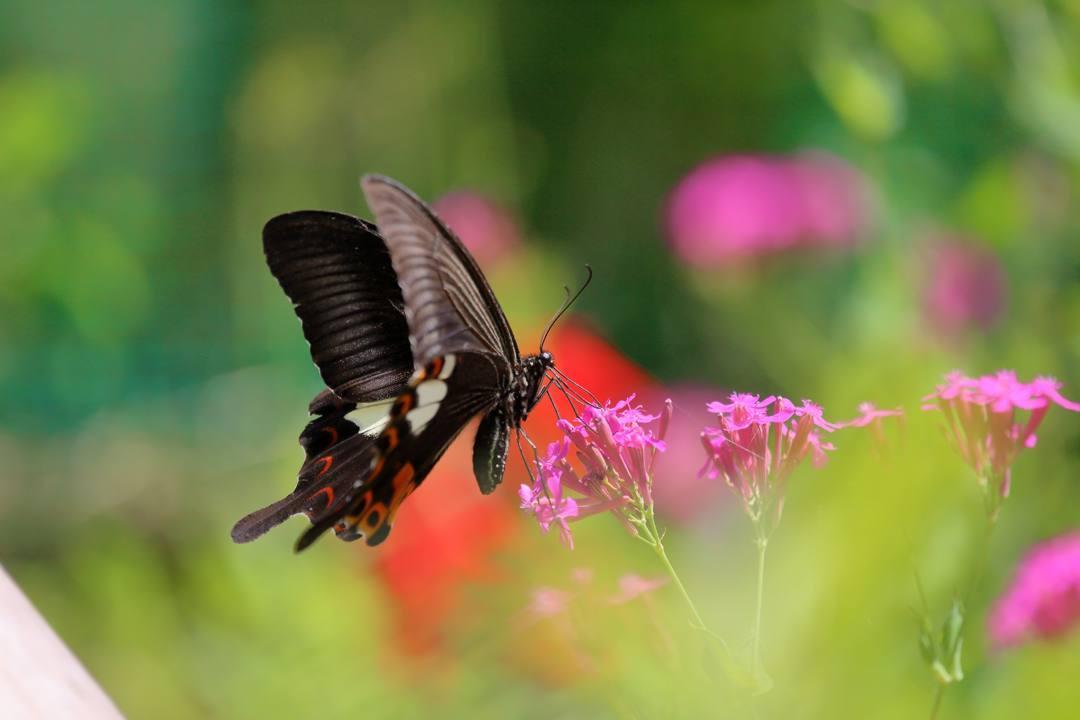 花と蝶その2_e0403850_20145031.jpg