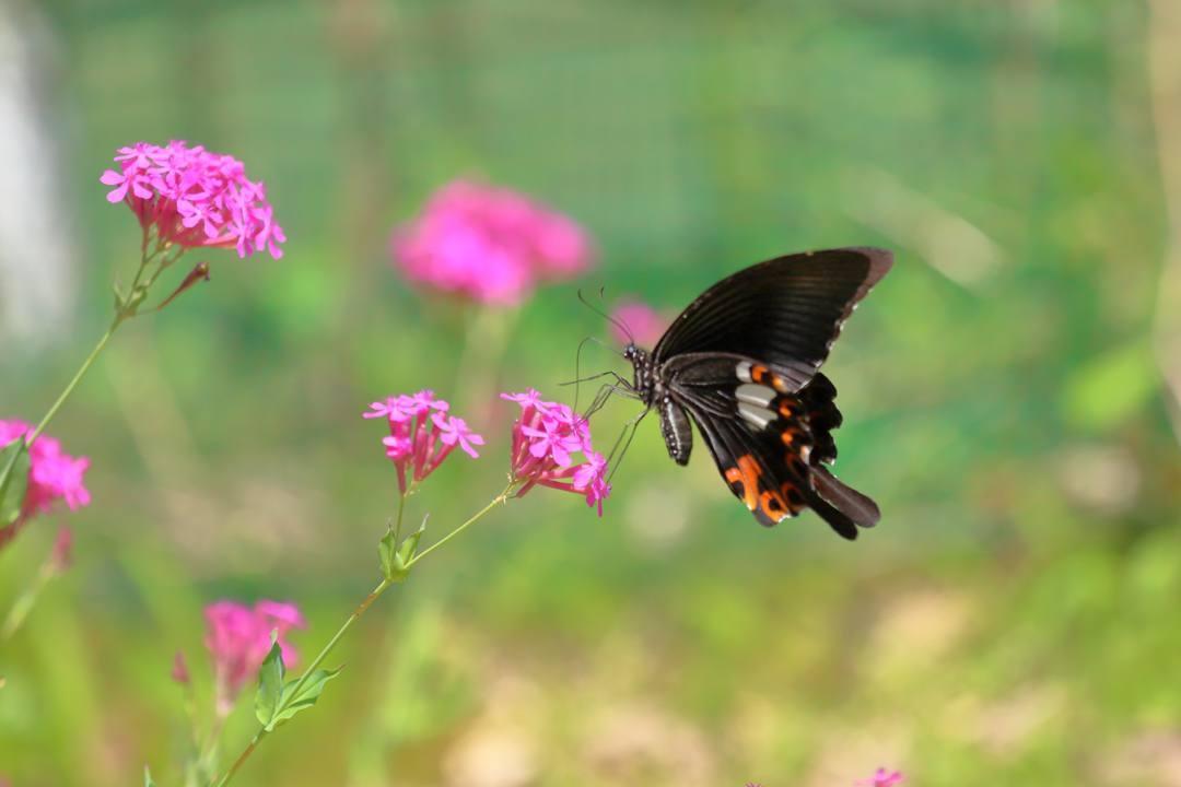 花と蝶その2_e0403850_20145590.jpg