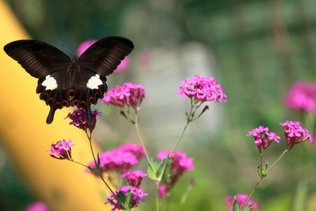 花と蝶その2_e0403850_20150050.jpg