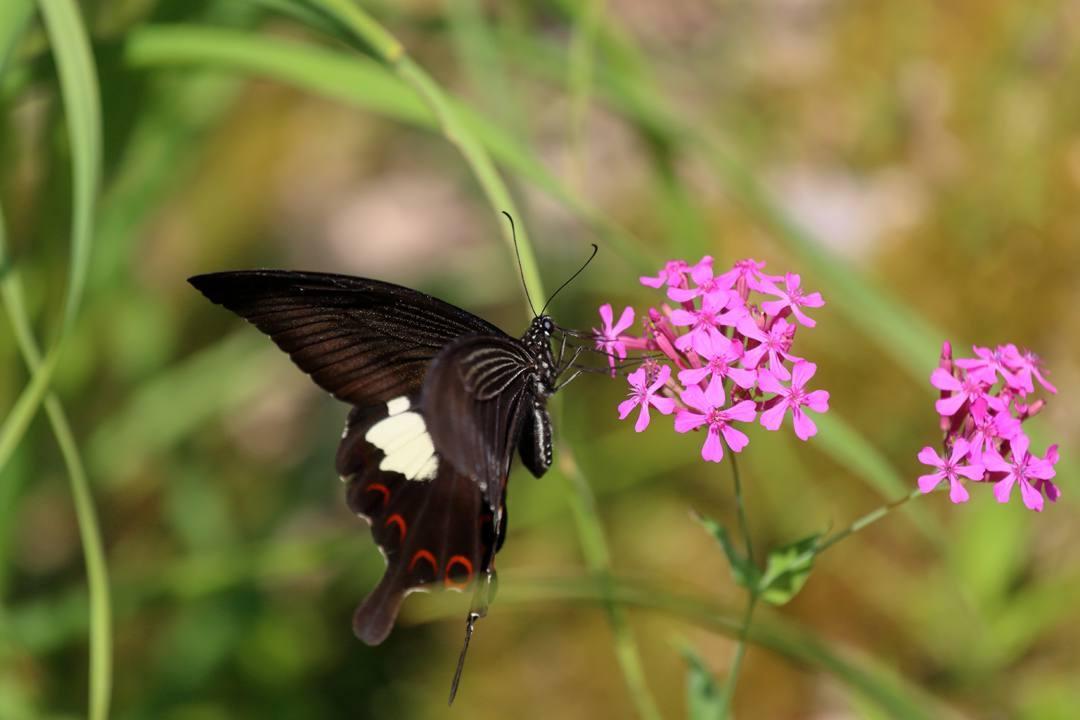 花と蝶その2_e0403850_20150801.jpg