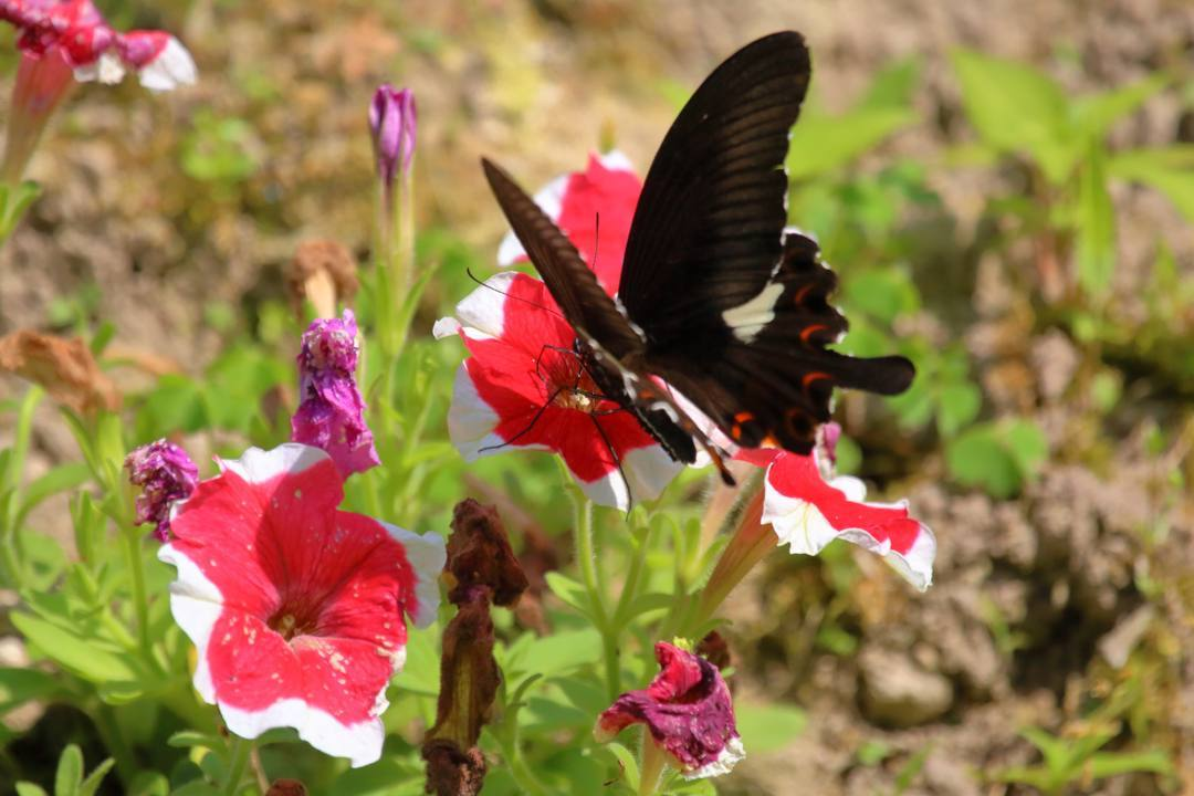 花と蝶その2_e0403850_20151225.jpg