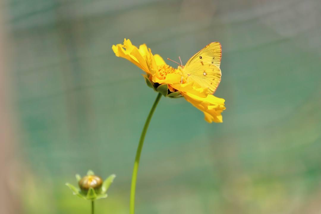 花と蝶その2_e0403850_20153684.jpg
