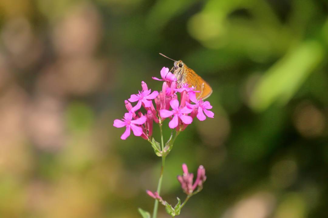 花と蝶その2_e0403850_20153983.jpg