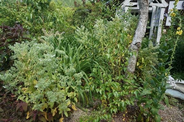庭がワイルドに_e0365880_20584764.jpg