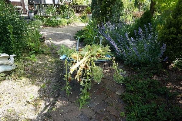 庭がワイルドに_e0365880_20585983.jpg