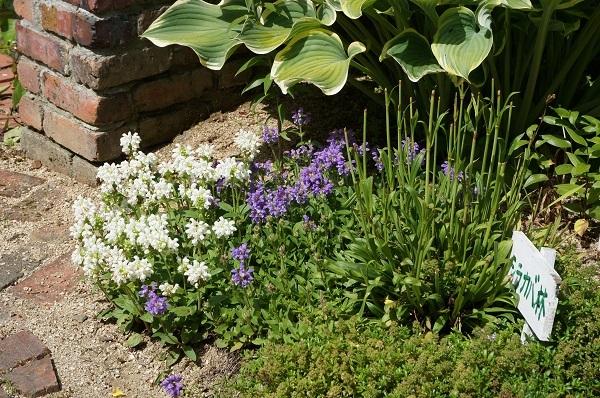 庭がワイルドに_e0365880_20593914.jpg