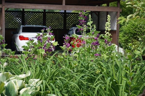 庭がワイルドに_e0365880_20595686.jpg