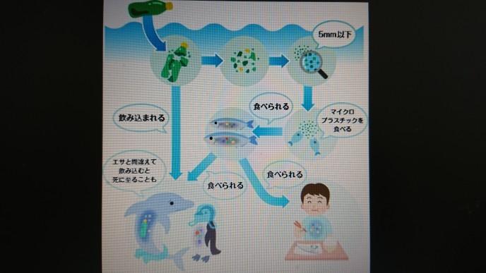 6/8  レジ袋廃止 その2_e0185893_07540379.jpg