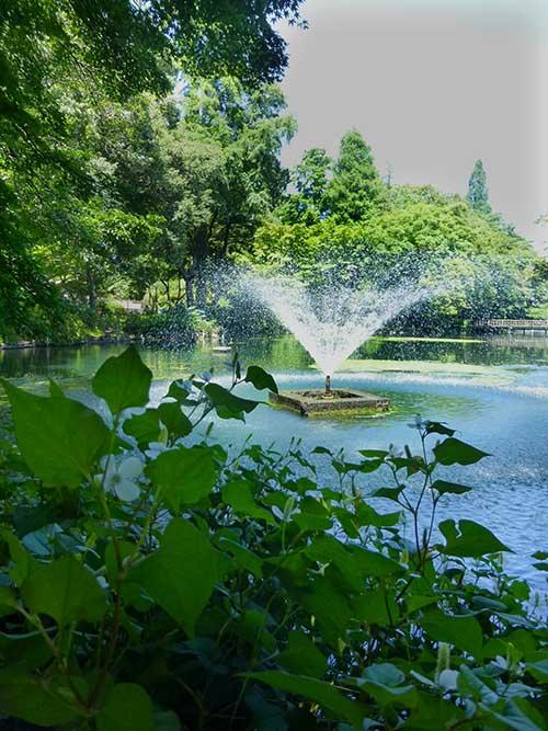 ひさびさの吉祥寺と井の頭公園_d0128697_6362540.jpg