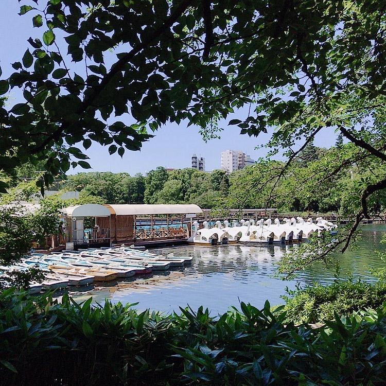ひさびさの吉祥寺と井の頭公園_d0128697_6422686.jpg